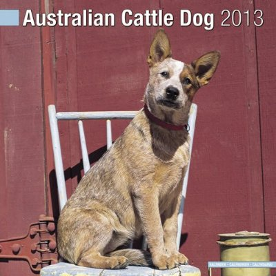 Petprints Australian Cattle Dog Calendar