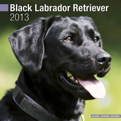 Petprints Black Labrador Retriever Calendar