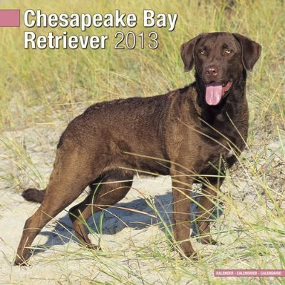 Petprints Chesapeake Bay Retriever Calendar
