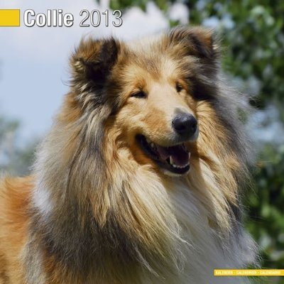 Petprints Collie Calendar