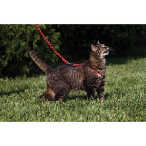 Come With Me Kitty Harness Bungee Leash