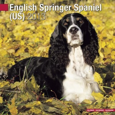 Petprints English Springer Spaniel Calendar