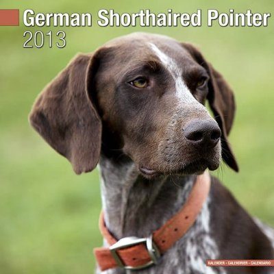 Petprints German Shorthaired Pointer Calendar
