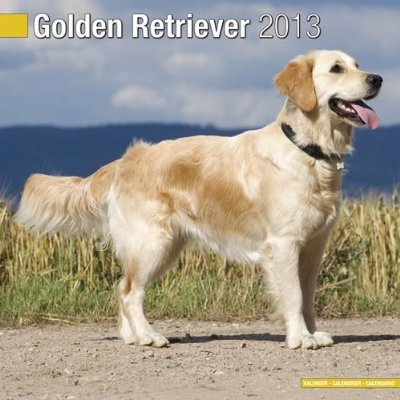 Petprints Golden Retriever Calendar