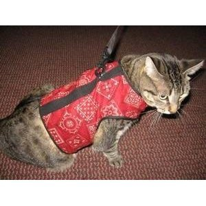 Kitty Holster Cat Harness With Red Bandana