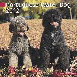 Petprints Portuguese Water Dog Calendar