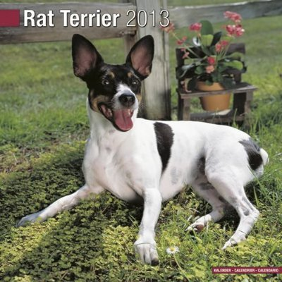 Petprints Rat Terrier Calendar