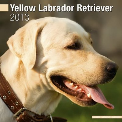 Petprints Yellow Labrador Retriever Calendar